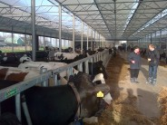 ECIP Cattle sheds